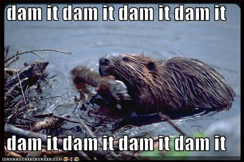 The Quote Tower - Page 4 Funny-pictures-beaver-dam-it