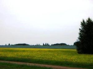 prairie yellow blue